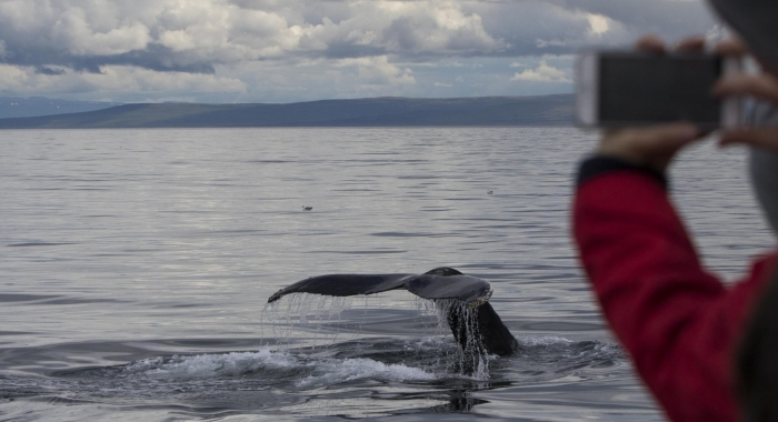020818 close humpback fluke