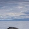 020818 tail and clouds portrait