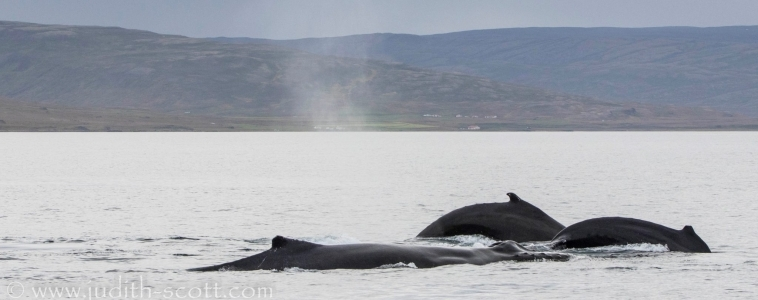 02/09/2018: Calm seas return and plenty of whales in both our locations