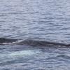 030718 close humpback