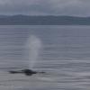 030818 humpback blow