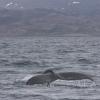 040718 humpback fluke