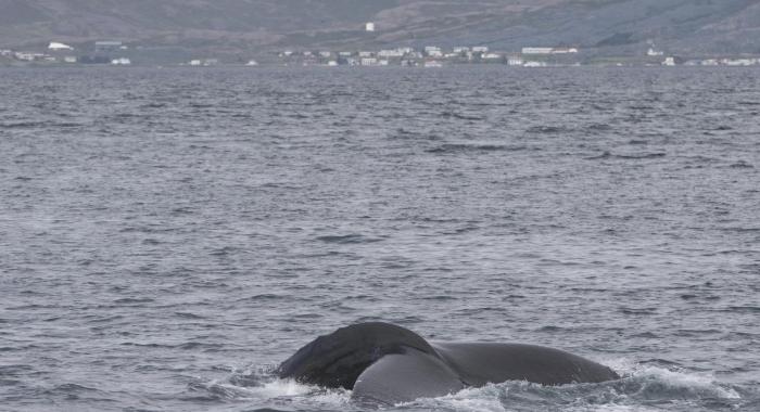 050718 morning humpback fluke