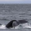 050818 humpback tail