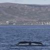 060718 humpback tail and Holmavik