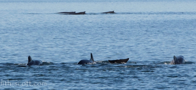 07/09/2018: On the sunniest, warmest day of the year so far, the whales didn't disappoint.