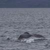 080718 humpback fluke