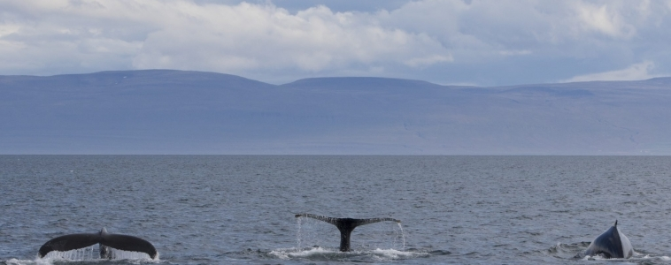 08/08/2018 More whales than passengers!