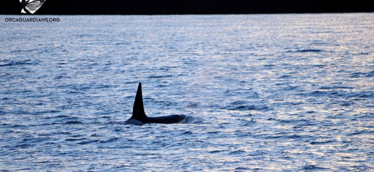 We DID have orcas today!
