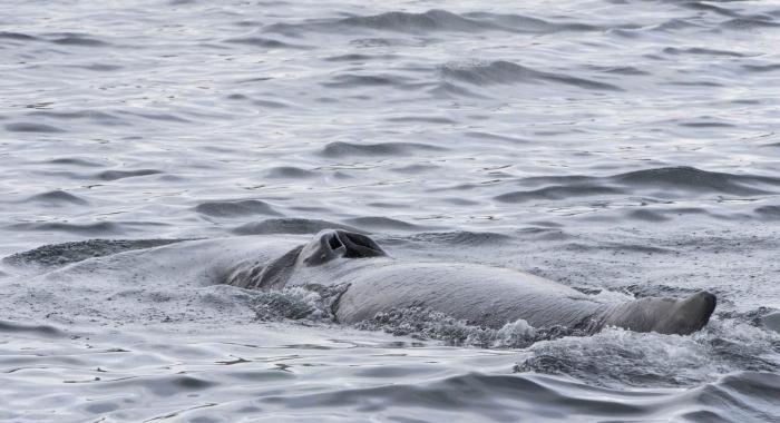 120718 humpback whale