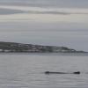 130718 humpback Drangsnes