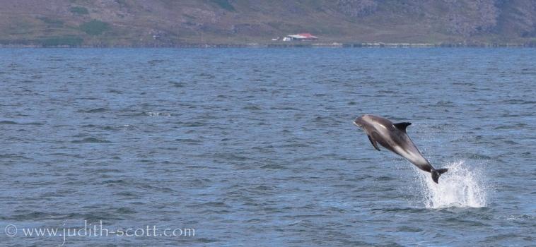 Sun, sea, whales