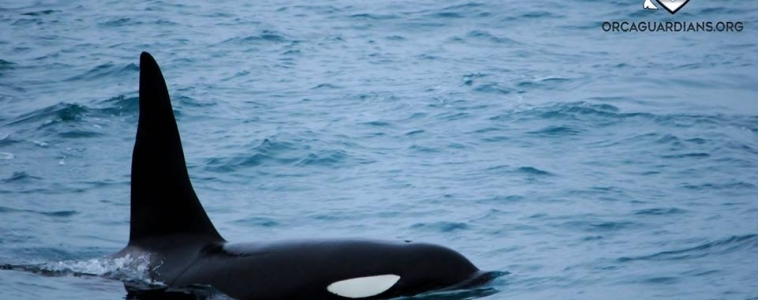 Yes, we can….find you orcas!!