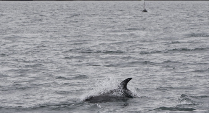 140718 dolphin