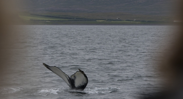 140718 humpback with passengers