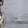 140818 close humpback
