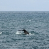 160718 sperm whale