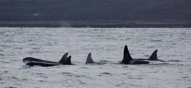 Two tours with Orca Sightings