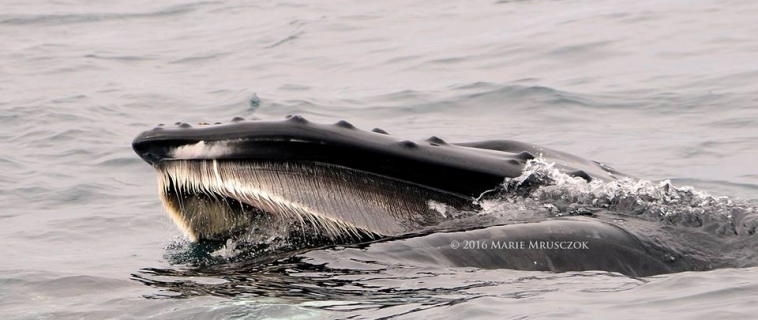 Our whale watching tour encountered four different cetacean species
