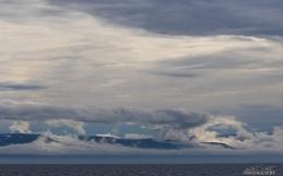 Humpbacks galore and pilot whales