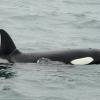 2107 orca