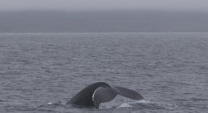 210718 humpback