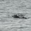 2207 humpback head