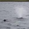 220718 humpback whale