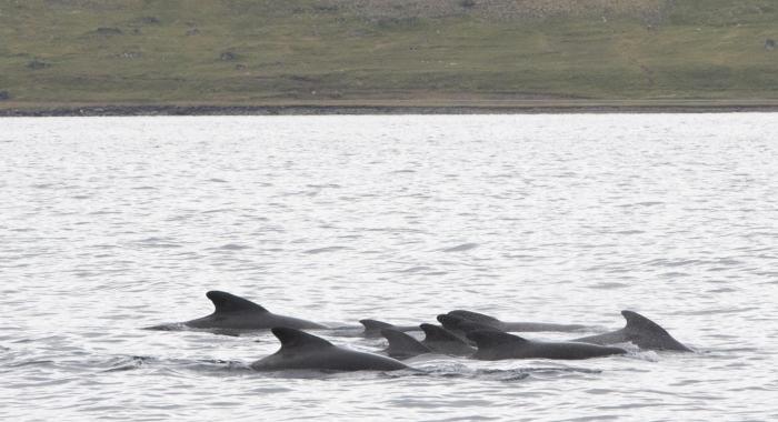 220818 pilot whales