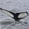 230718 humpback ID