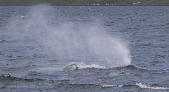 230718 humpback massive blow