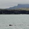 2407 humpback Olafsvik