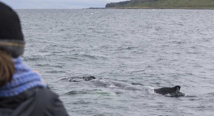 240718 close humpback Holmavik