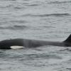 2507 orca 2