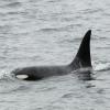 2507 orca