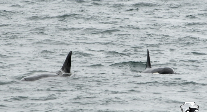2507 orcas