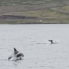250718 dolphins