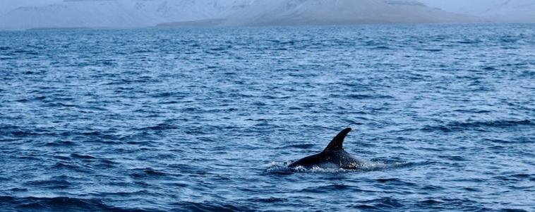 15 white-beaked dolphins!