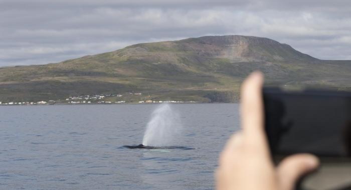 260818 humpback and passenger