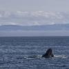 270718 feeding humpback