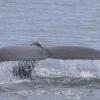 270718 nice humpback tail
