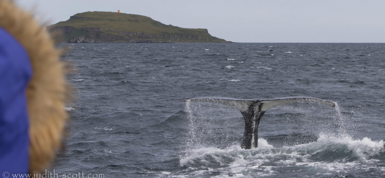 27/08/2018: Humpbacks and wind!