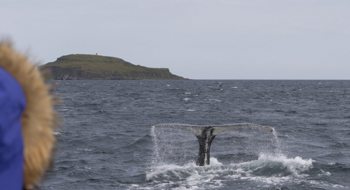 270818 humpback close tail