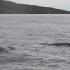 280718 two whales