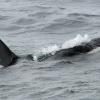 3007 orca 1