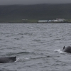 300718 2 whales