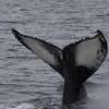 310818 humpback Example