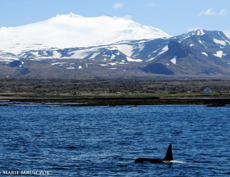 15 Tipps für die Halbinsel Snaefellsnes Island