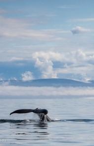 Holmavik Island Entdecken – Whale Watching, Museen, Wandern, Reiten und mehr in Holmavik in den Westfjorden