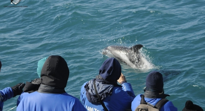 Close dolphin